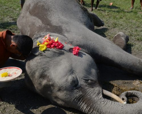 Elephant Killed By Plastic Pollution