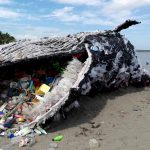 64lbs Of Plastic found, In The Belly Of A Sperm Whale